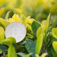 В SEC поступила заявка на создание «зеленого» биткоин-траста