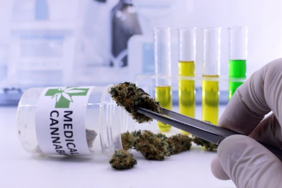 A scientist holding a cannabis bud between tweezers